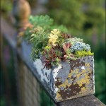 Succulent Gardens For Small Spaces Dengarden Home And Garden