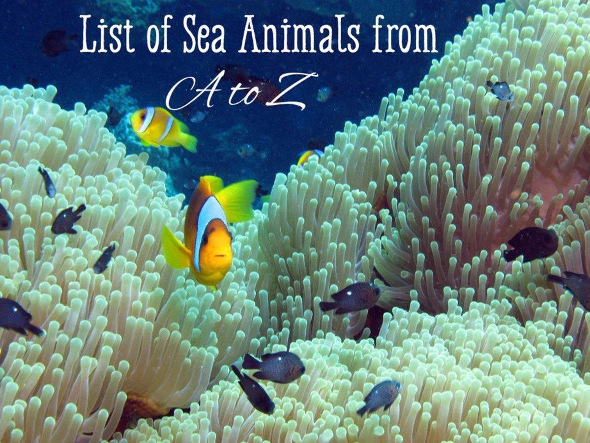 sea animals list