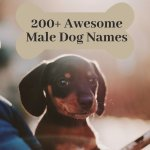 200 Cool Male Dog Names And Meanings Pethelpful By Fellow Animal Lovers And Experts