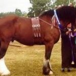 10 Of The World S Most Beautiful Draft Horse Breeds And Heavy Horses Pethelpful By Fellow Animal Lovers And Experts