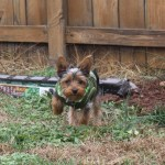 Fence Ideas For Dog Owners Pethelpful By Fellow Animal Lovers And Experts