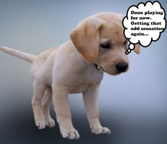 Signs Your Puppy Needs to Go Potty - PetHelpful - By fellow animal lovers  and experts
