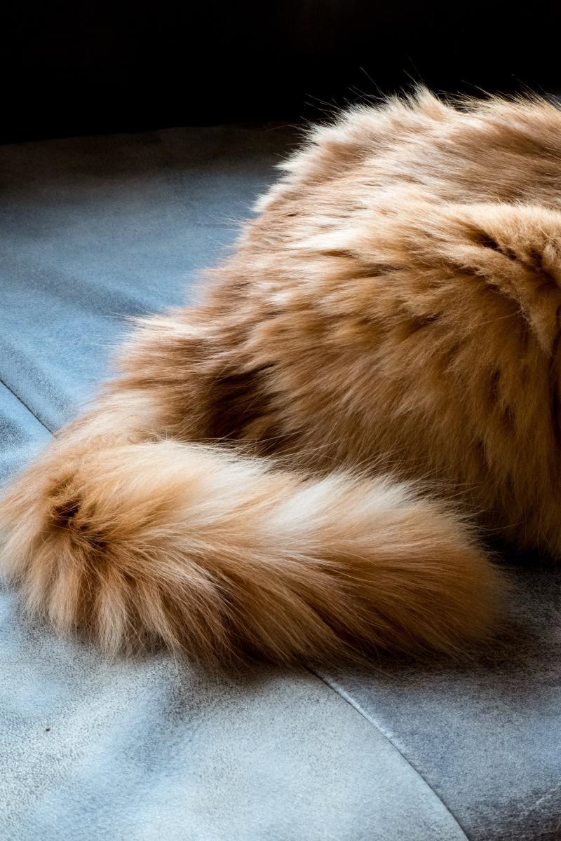 Jika ekor kucing bengkak, diturunkan, atau dicambuk ke depan dan belakang, itu adalah tanda ketidaksenangan.