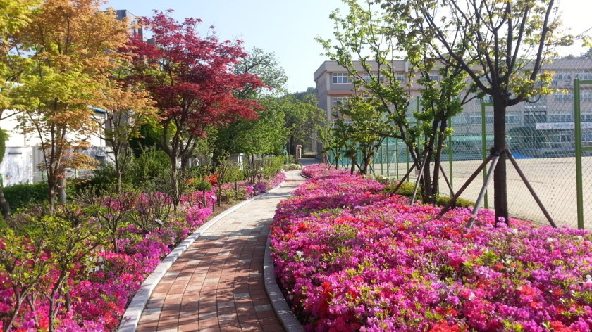 نتيجة بحث الصور عن south korea spring