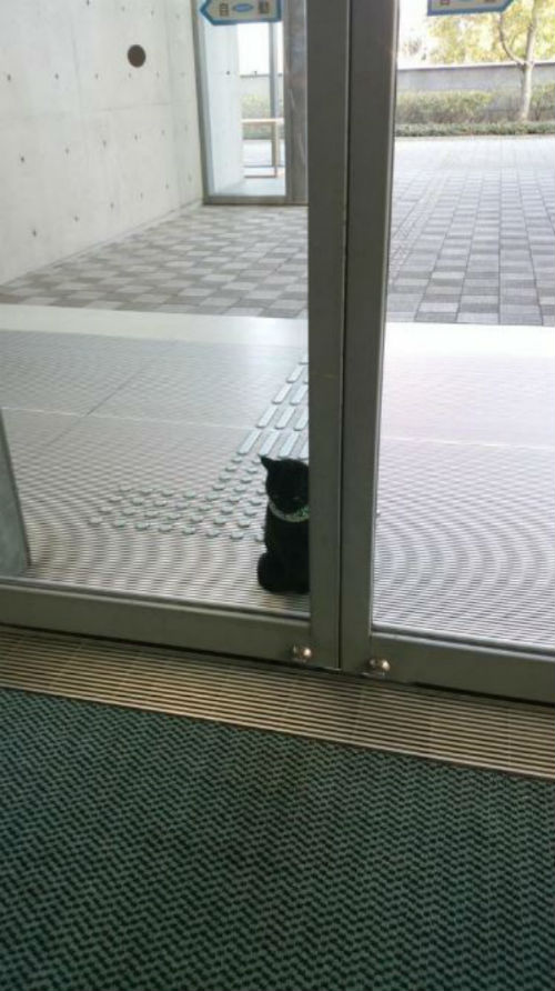 Japan museum cat