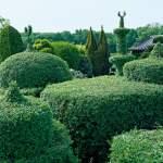 So Gelingen Skulpturen Aus Buchsbaum Und Eibe Selbermachen De