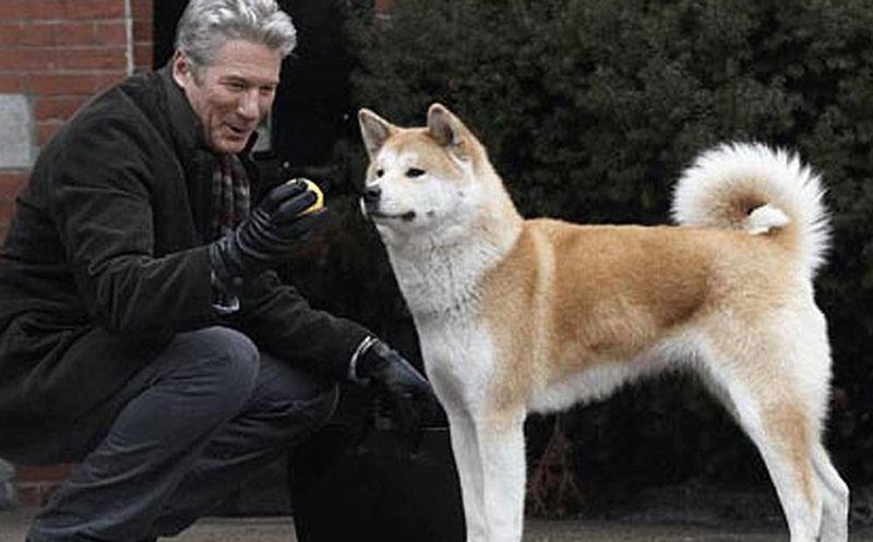 Resultado de imagen para hachiko a dog's tale 2009 sinopsis