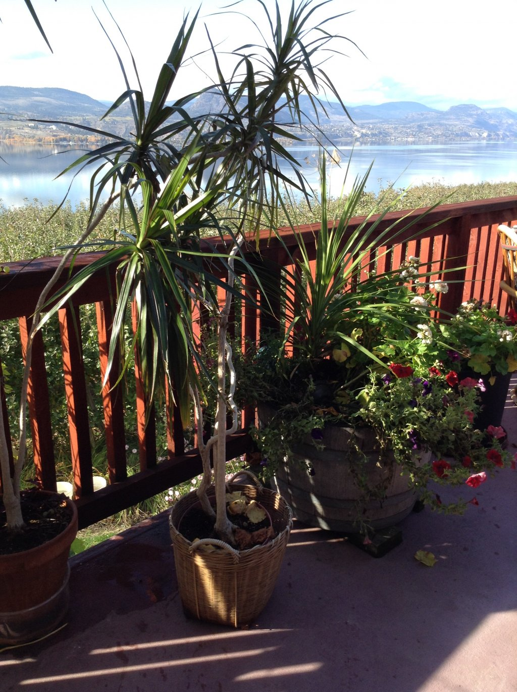 House Plant For Sale In Penticton Bc 【 Skaha Ca