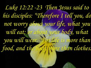 Image result for do not worry about your life