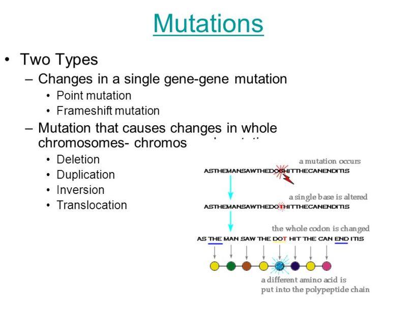 Frameshift Mutation Types | lajulak.org