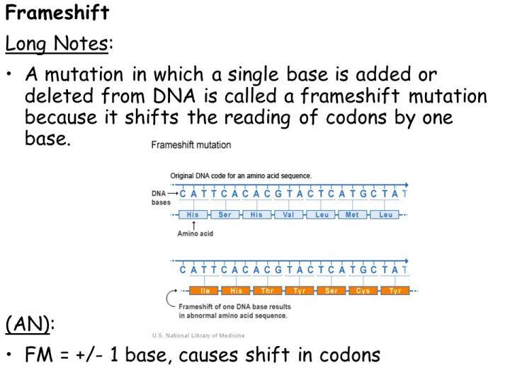 Frameshift Mutation Definition Genetics | Frameswall.co