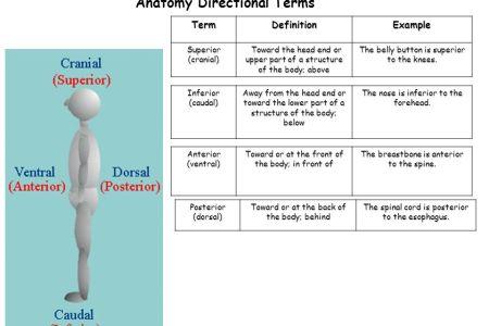 Interior Inferior Anatomy Examples Full Hd Maps Locations