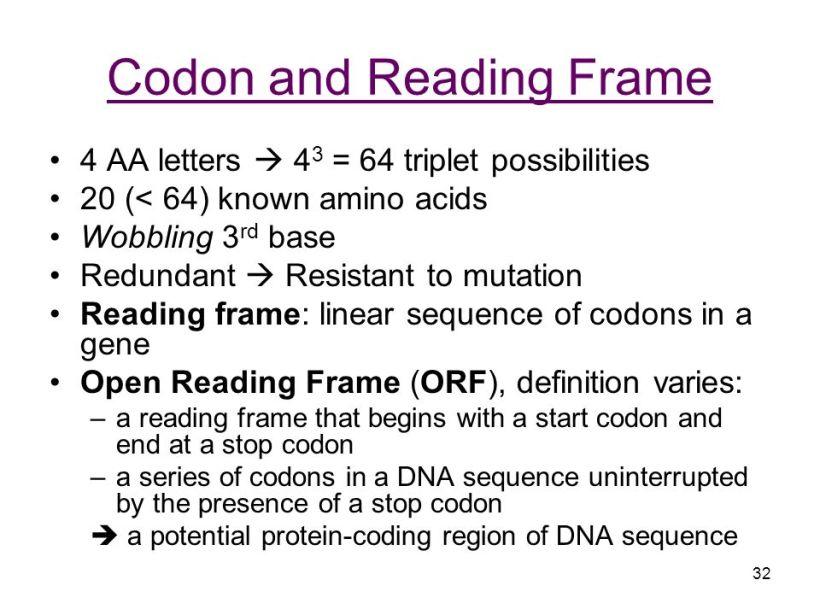 Open Reading Frame Definition Genetics | Amtframe.org