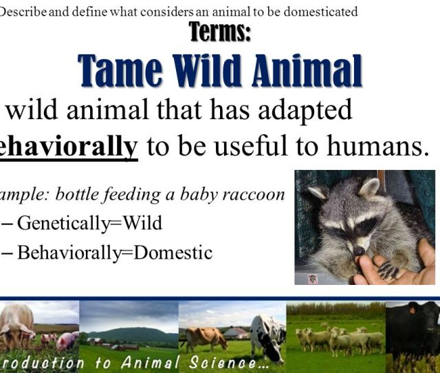 Terms Domestic Animals Rely On Humans For Food Shelter Bred Through Artificial Selection
