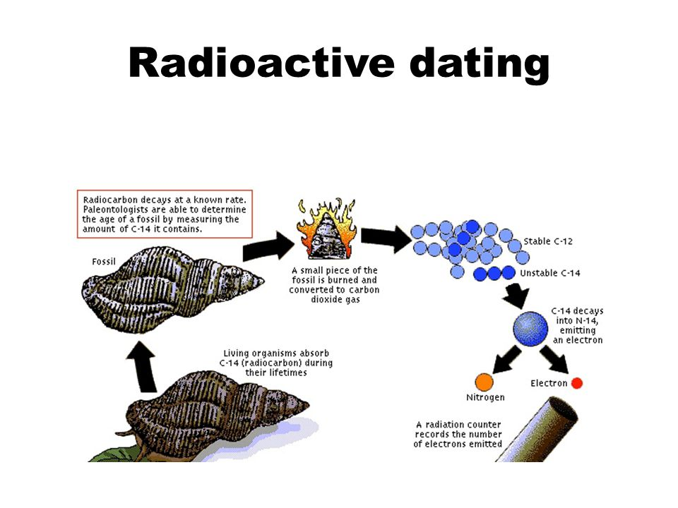 radiometric dating in biology Radiometric dating is a means of determining the age of a mineral specimen by  determining the relative amounts present of certain radioactive elements.