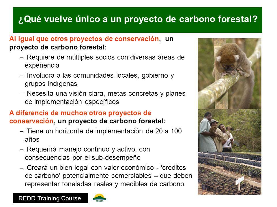 Resultado de imagen para proyectos forestales de carbono