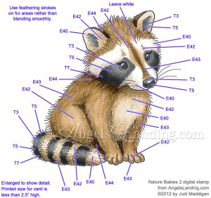 Baby Raccoon Coloring Guide by Crafts  at Splitcoaststampers