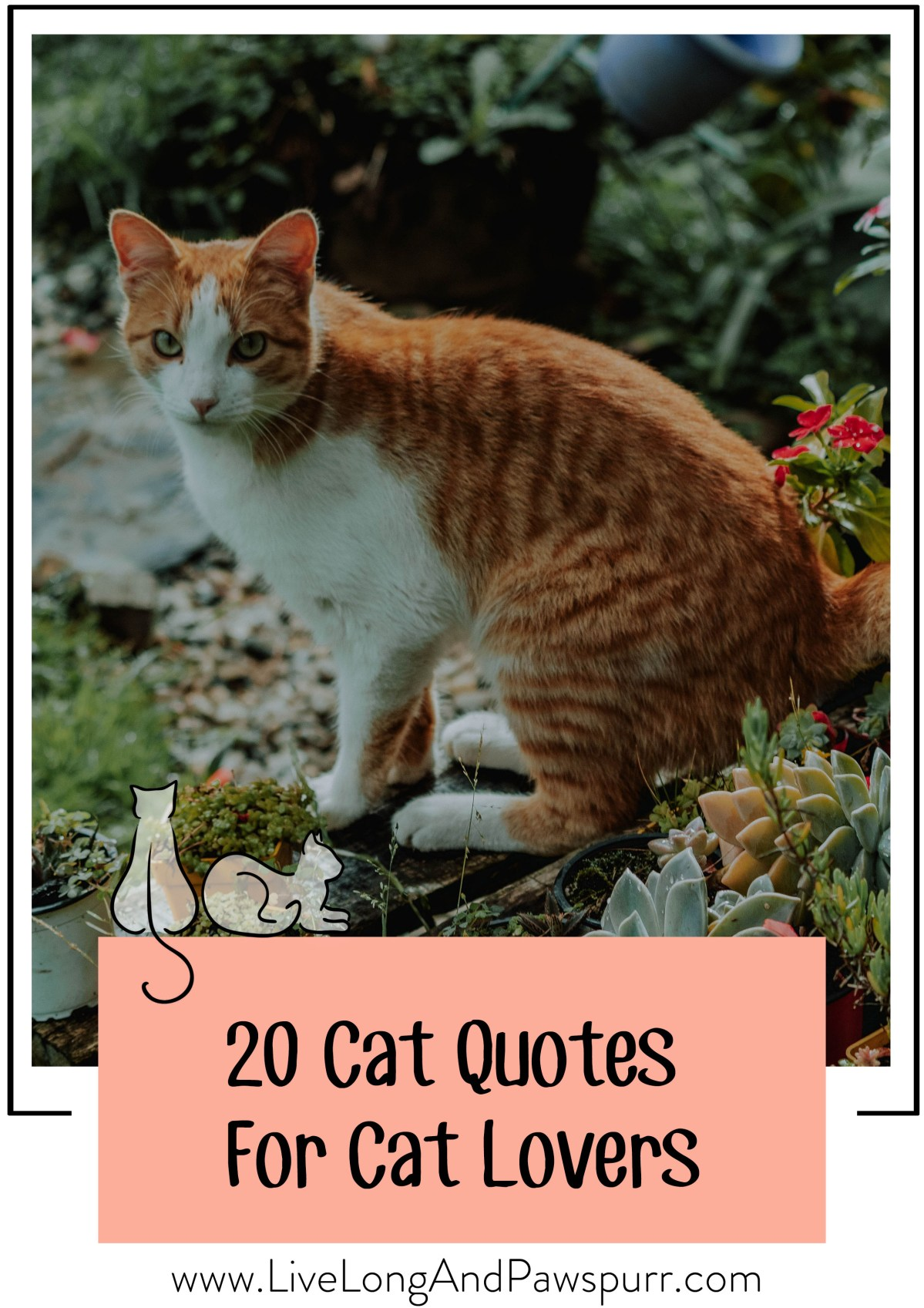 """20 Heart-Warming Cat Quotes"""" class="""