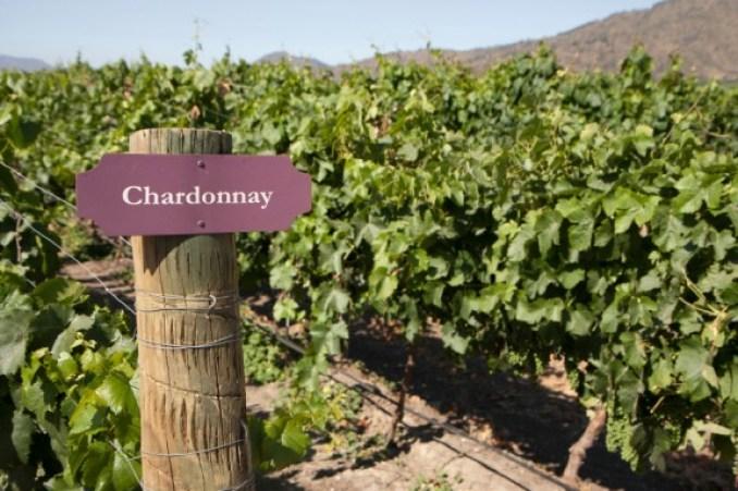 Chardonnay — Through the Cellar Door