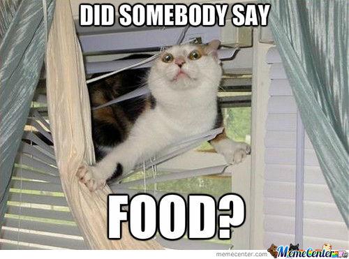 Feel Better Cat Meme