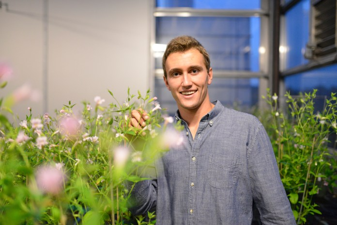 5th semester molecular and cell biology major on the pre-med track Griffin Struyk is pictured in a UConn Greenhouse. Struyk's research is exploring biosynthetic pathways of pigments,helping to better understand the molecular basis of evolution. (Jason Jiang/The Daily Campus)