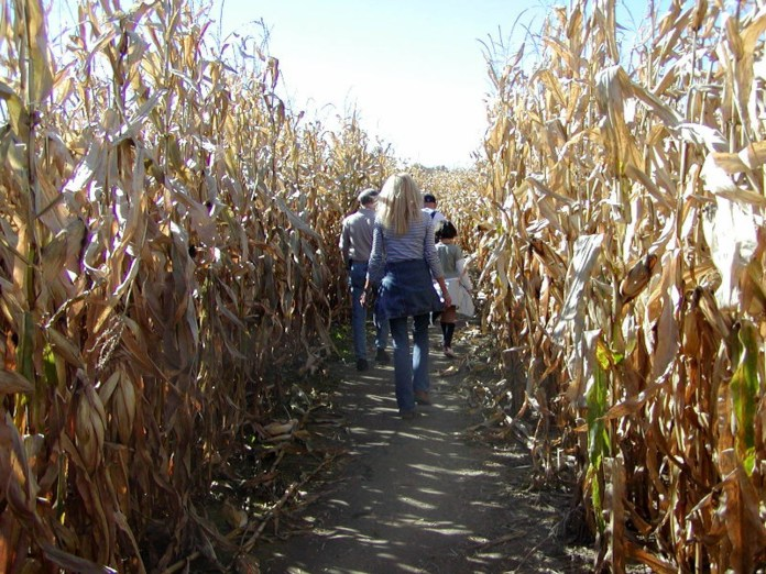 Corn mazes, hay rides and haunted houses are popular activities to celebrate Halloween and many of them can be found around UConn. (Anne Mitchell/Flickr, Creative Commons)