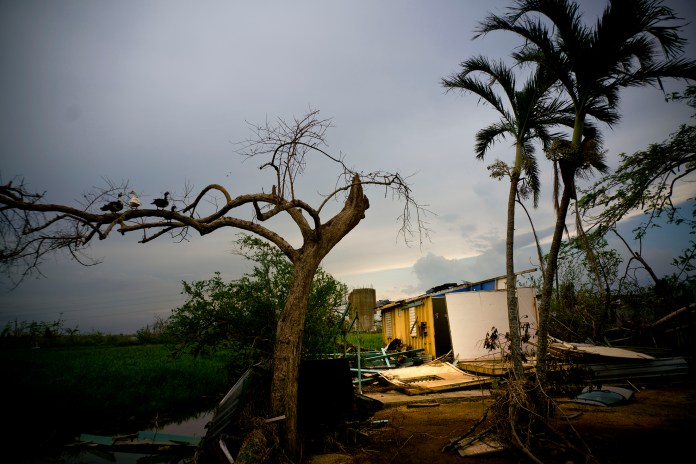 """Ducks perch on the branch of a tree next to a home destroyed by Hurricane Maria in Toa Baja, Puerto Rico, Thursday, Oct. 12, 2017. President Donald Trump lashed out at hurricane-devastated Puerto Rico on Thursday, insisting in tweets that the federal government can't keep sending help """"forever"""" and suggesting the U.S. territory was to blame for its financial struggles. (AP Photo/Ramon Espinosa)"""