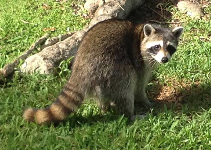 Rabies, despite how well-known it is, still has a lot of mystery and misconceptions surrounding it.  (Adam Skowronski/Flickr, Creative Commons)