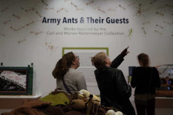 """Students and members of the public attend the grand opening of two new exhibitions at The Ballard Museum of Puppetry on Thursday, Oct. 17. The exhibit """"Immaterial Remains"""" showcased Chinese shadow puppetry, and the exhibit """"Army Ants and Their Guests"""" showcased collaborative puppet work between UConn's Ecology and Evolutionary Biology and Puppetry Departments.   Photo by Maggie Chafouleas / The Daily Campus"""