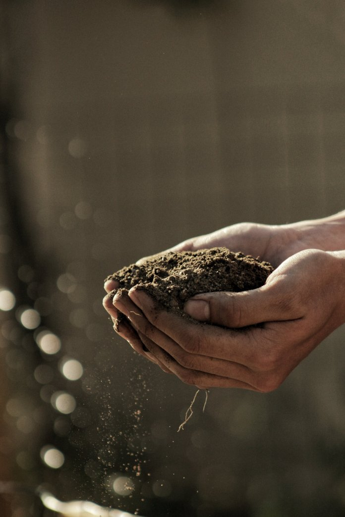 Not all soils are created equal! Do some research to find out what type of soil works best for the plants you're hoping to grow.  Photo by    Gabriel Jimenez    on    Unsplash   .