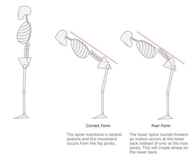 Exercise Spotlight: Hip Hinge — Endurance Physio Missoula Physical Therapy