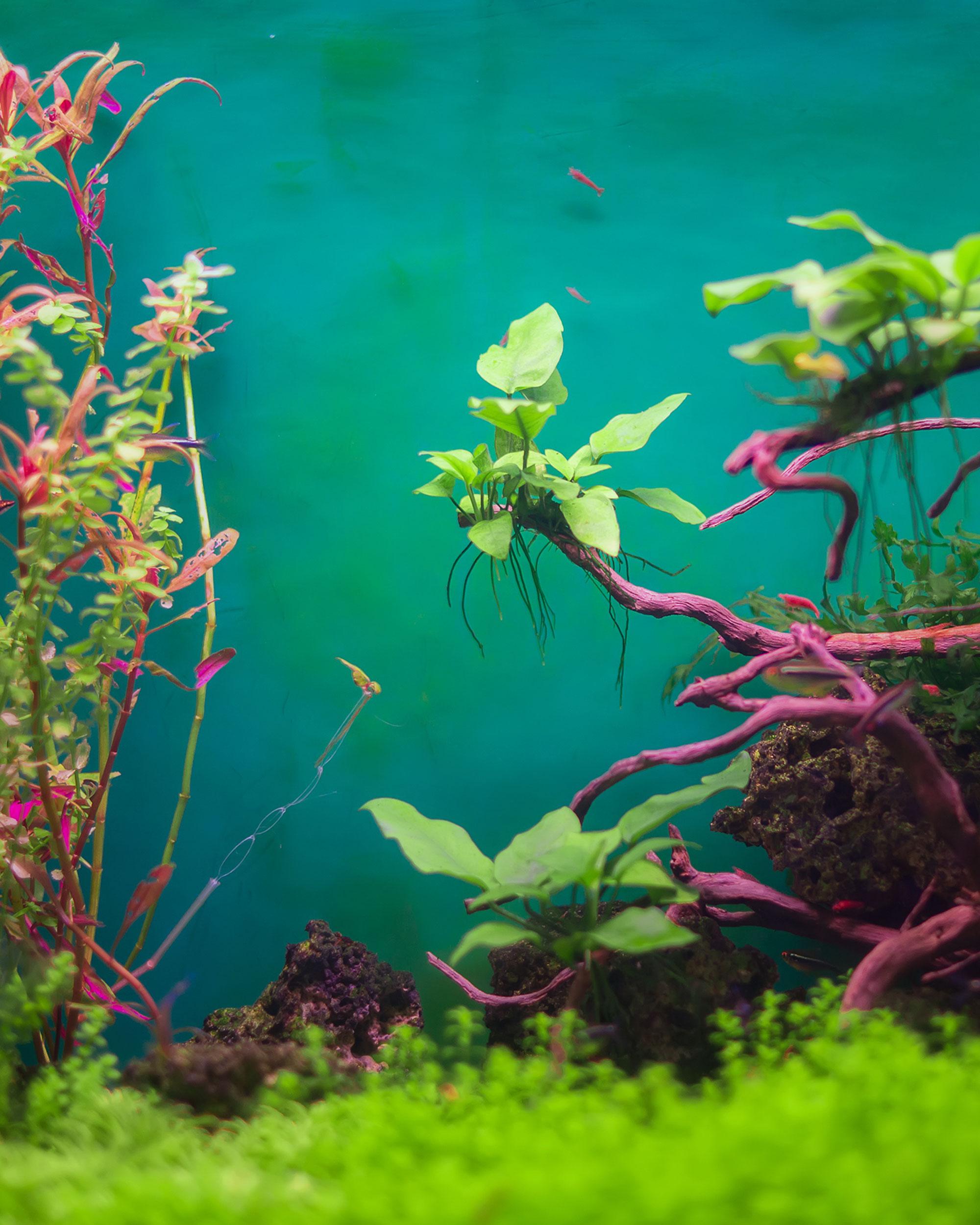 aquarium vinyl