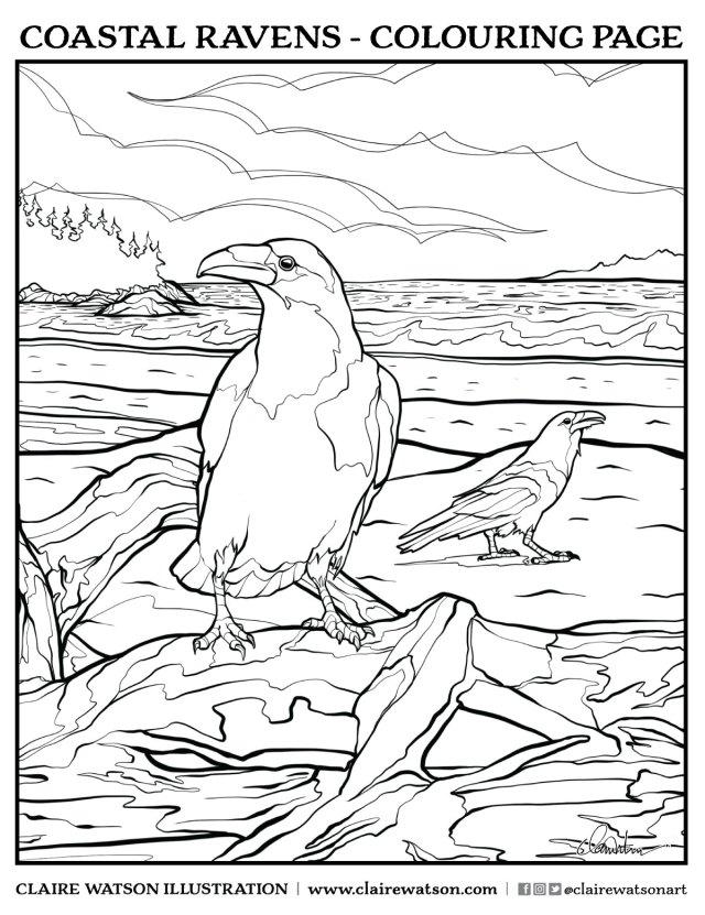 Coastal Ravens - Colouring Page — CLAIRE WATSON