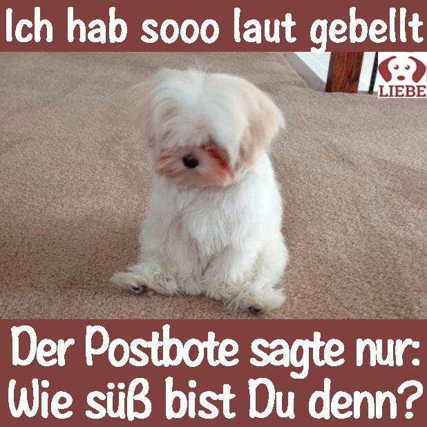 Meme Hund Verwandtschaft 2017 Pfotenpiloten