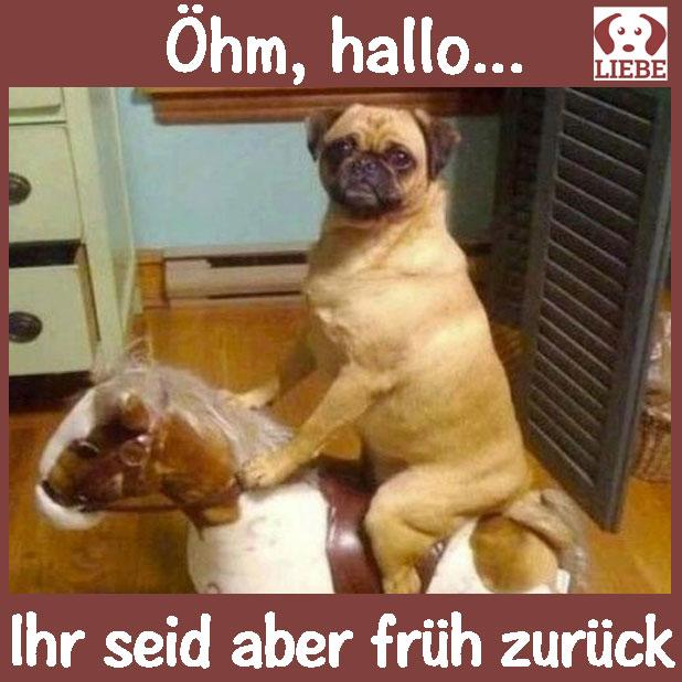Z One 1 Lustige Meme Labrador Maske Halloween Latex Tier Hund