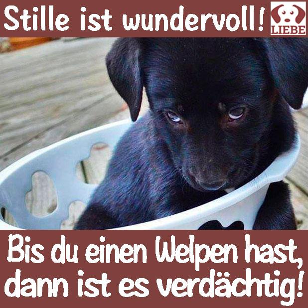 Doge Shiba Inu Rasse Hund Meme Abzeichen Pin 1 25 Ebay