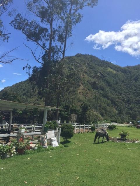 Cocora valley