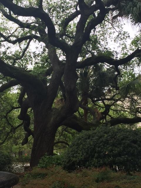 beautiful trees all around