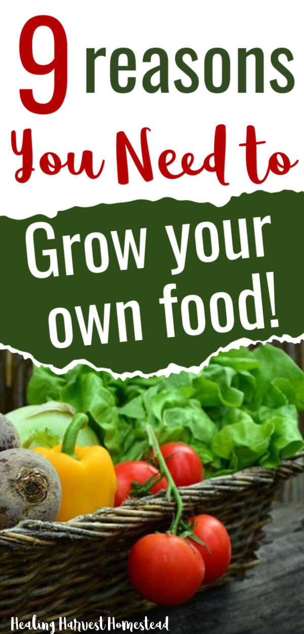 Why You Need To Grow At Least Some Of Your Own Food Get Your Personal Victory Garden Going Now All Posts Healing Harvest Homestead