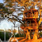 All The Places You Can Go To Visit A Nelson Treehouse Nelson Treehouse