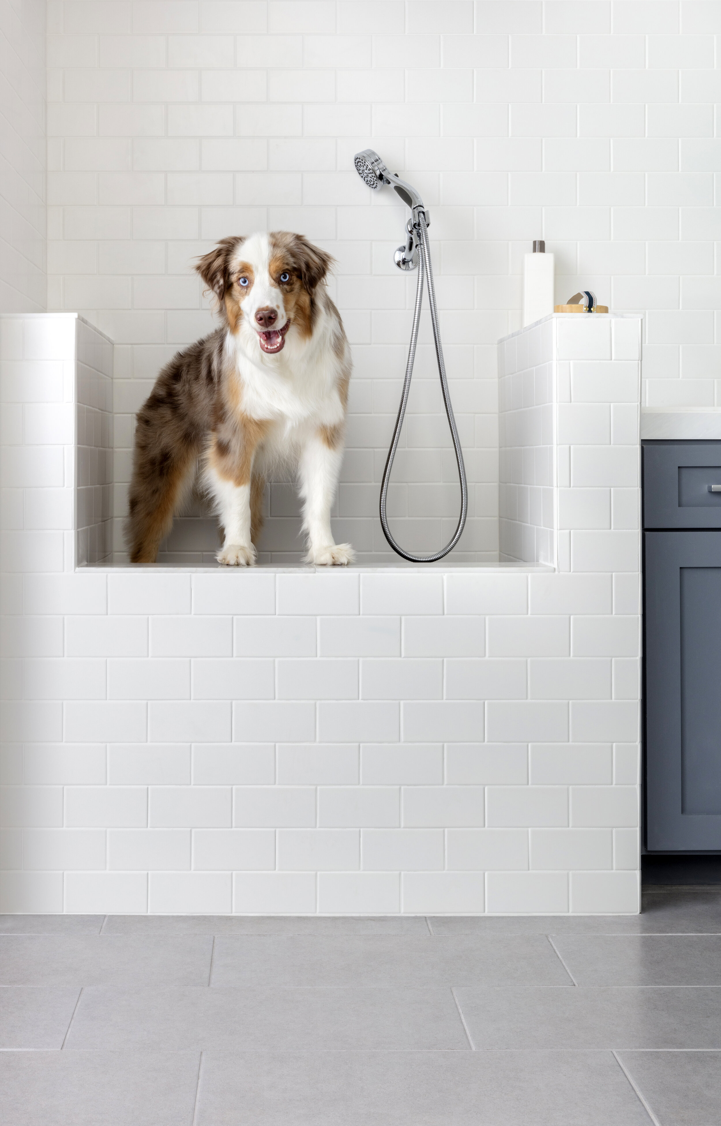 home tile shop colleen guenther