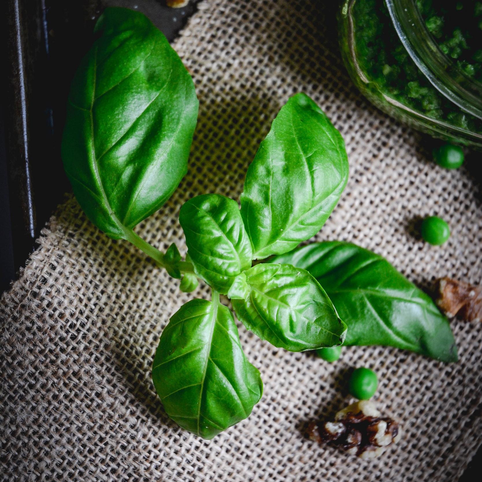Basil, peas and walnuts on table