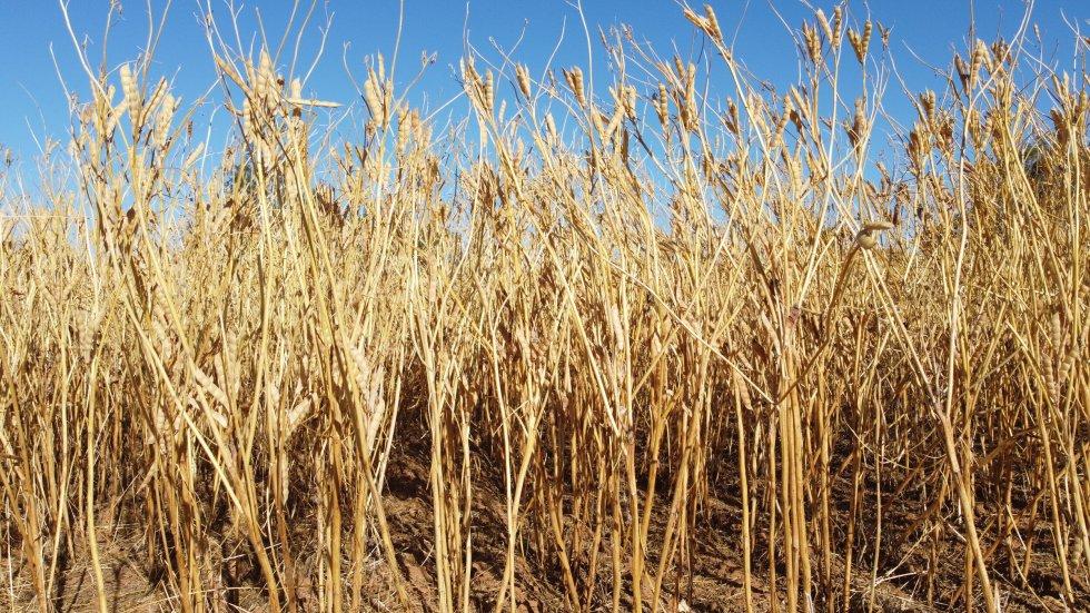 14 December 2020 - harvest day
