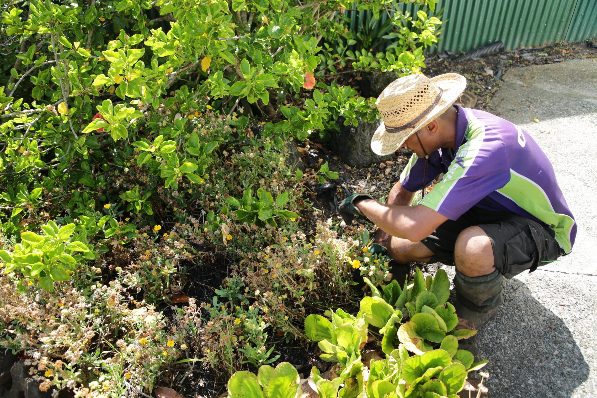 Garden Tips Crewcut Lawn Garden