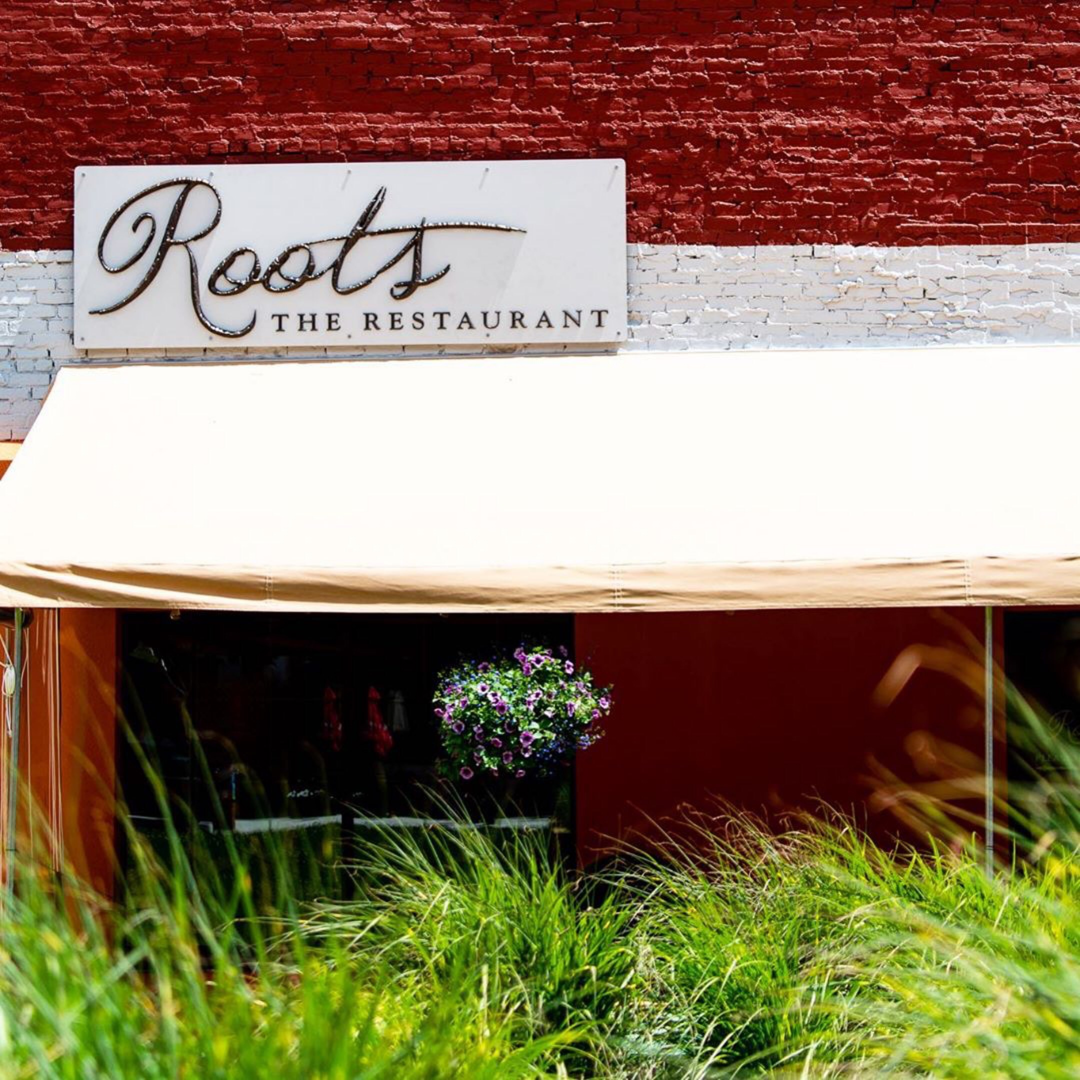 roots grows in the marketplace park