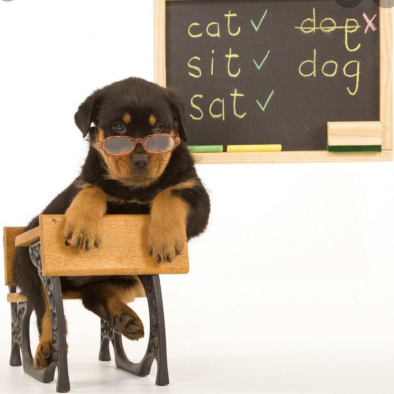 Virtual Classes — Puppy Speaks Academy