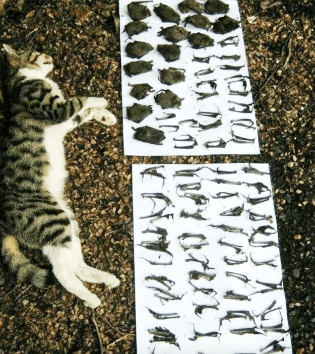 Remains of meals of a feral cat in Australia.  Source