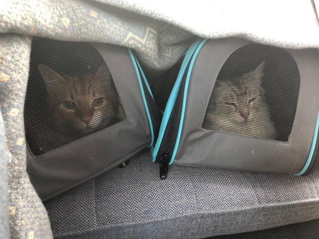 cats-in-travel-carriers