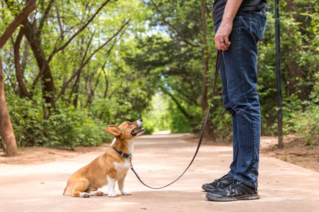Lucy Park Wichita Falls dog friendly.jpg
