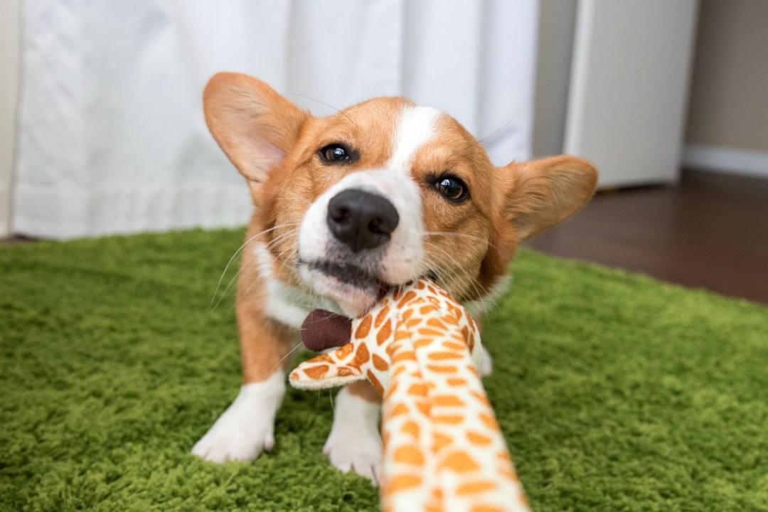 Amazon Dog products.jpg